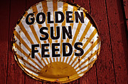 Barn Yard Prints - Golden Sun Feeds Print by Terrie Heslop