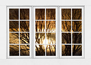 Picture Window Frame Photos Art - Golden Sun Silhouetted Tree Branches White Window View by James Bo Insogna