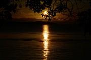 Golden Sunset Print by David Berner