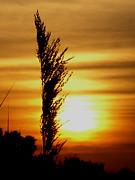 Jeanette K - Golden Sunset