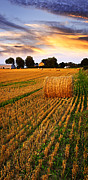 Crops Posters - Golden sunset over farm field with hay bales Poster by Elena Elisseeva
