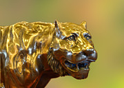 Cast Sculpture Posters - Golden Tiger Poster by Linda Phelps