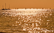 Eventide Prints - Golden Time Print by Maureen J Haldeman