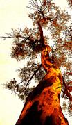 Juan Jose Espinoza - Golden Tree 2