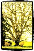 Craig Perry-Ollila - Golden Tree