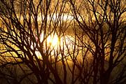 James BO  Insogna - Golden Tree Dream