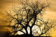 Photography Prints Prints - Golden Tree Sunset Silhouette Print by James Bo Insogna