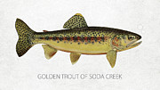 Golden Trout Of Soda Creek Print by Aged Pixel