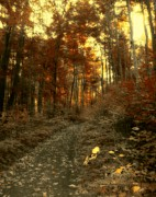 Autumn Landscape Digital Art - Golden Walk by Gothicolors And Crows