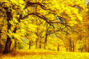 Yellow Trees Framed Prints - Golden Whisper Framed Print by Stefan Kuhn