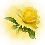 Jane Mcilroy Posters - Golden Yellow Rose Poster by Jane McIlroy