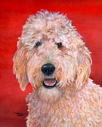 Terry Albert - Goldendoodle