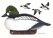 James Lewis Metal Prints - Goldeneye Decoy Metal Print by James Lewis
