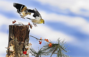 Lichen Photos Posters - Goldfiches flying over lichen stump Poster by Randall Branham