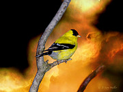 Backyard Goldfinch Digital Art Posters - Goldfinch At The Edge Of The Abyss Poster by J Larry Walker