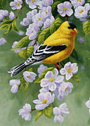 Crista Forest - Goldfinch Blossoms Greeting Card 1