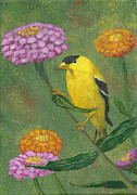 Fran Brooks - Goldfinch Garden