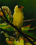 Kenneth Young - Goldfinch