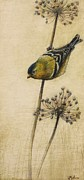 Graphite Framed Prints - Goldfinch Framed Print by Lori  McNee