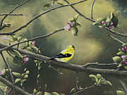 Goldfinch Print by Mary Ann King