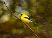 Backyard Goldfinch Digital Art Prints - Goldfinch On A Limb Print by J Larry Walker