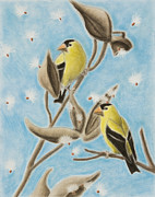Weed Pastels - Goldfinch on Seed Pod by Jeanette K