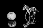 Plexiglass Photos - Golf Ball and Zebra by William  Carson