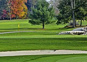 Fall Grass Prints - Golf Course Guardians Print by Robert Harmon