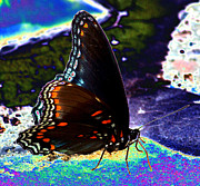 Disco Mixed Media Prints - Gona-Fly-Butterfly Print by Kim Pate
