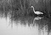 Grass Reflection Framed Prints - Gone Fishing in Black and White Framed Print by Suzanne Gaff