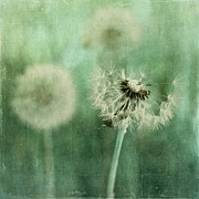 Dandelion Photos - Gone by Priska Wettstein