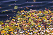 Fallen Leaf Photos - Gone With The Water by Alexander Senin