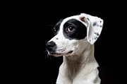 Lurcher Photo Posters - Good Boy Poster by Trevor Wintle