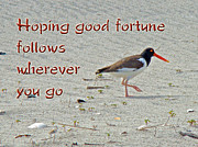 Good Luck Posters - Good Bye Good Luck Greeting Card - American Oystercatcher Poster by Mother Nature