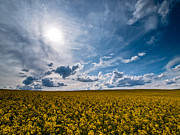 Spring Landscapes Prints - Good Day Print by Davorin Mance