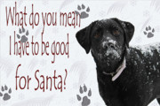 Black Labrador Posters - Good For Santa Poster by Cathy  Beharriell