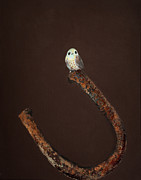 Rust Paintings - Good Luck Bird by Laura Sue