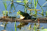 Goodwin Forest Frog Reflections  Print by Neal  Eslinger