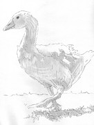 Goose Drawings - Goose Drawing by Mike Jory