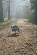 Patricia Hofmeester - Goose in a foggy park