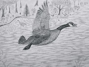 Gerald Strine - Goose in flight detail...