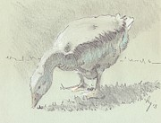 Goose Drawings - Goose by Mike Jory