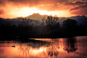 Sunset Wall Art Prints - Goose On Golden Ponds 1 Print by James Bo Insogna