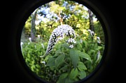 Gooseneck Loosestrife Photos - Gooseneck With A Fisheye by Carrie Munoz