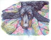 Sleeping Dog Drawings Posters - Gordon Setter Portrait Poster by Barbara Lightner