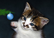 Terri Waters Prints - Gorgeous Christmas Kitten Print by Terri  Waters