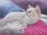 Cat Portraits Pastels Prints - Gorgeous Gemma Print by Pamela Humbargar