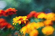 Kasia Dixon - Gorgeous Marigolds