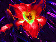 Blue Trumpet Flower Photos - Gorgeous Tiger Lily by Annie Zeno
