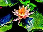 Gorgeous Water Lily Print by Annie Zeno